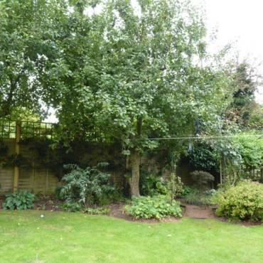 What to do about a much-loved tree?