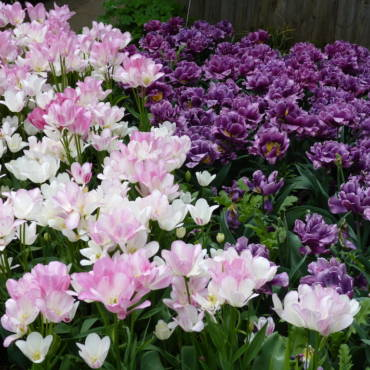 Top Tips for April Gardens